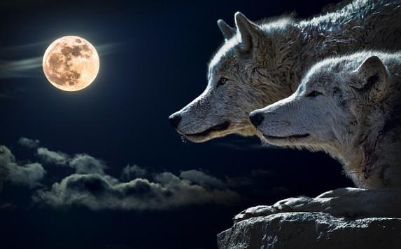 wolf-moon-mamawriter